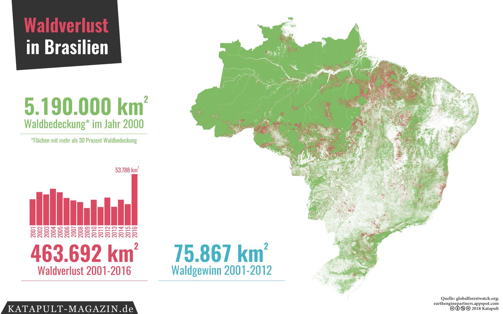 Katapult Die Grosste Regenwald Aufforstung Der Welt